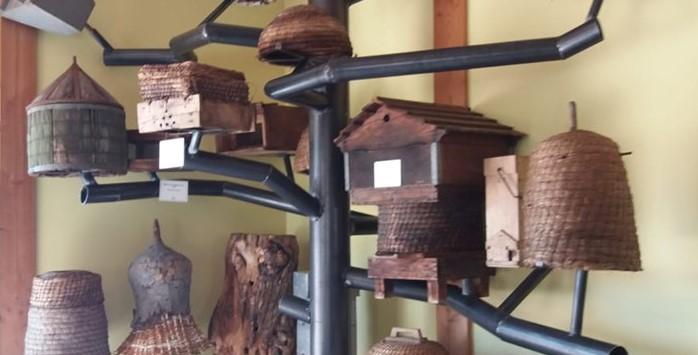 Présentation d'essaims d'abeilles aux Ruchers du Morvan