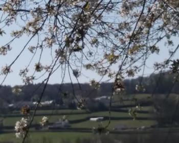Paysage de la campagne d'Arleuf
