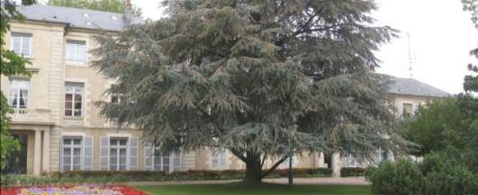 Cèdre du parc de la Préfecture de Nevers