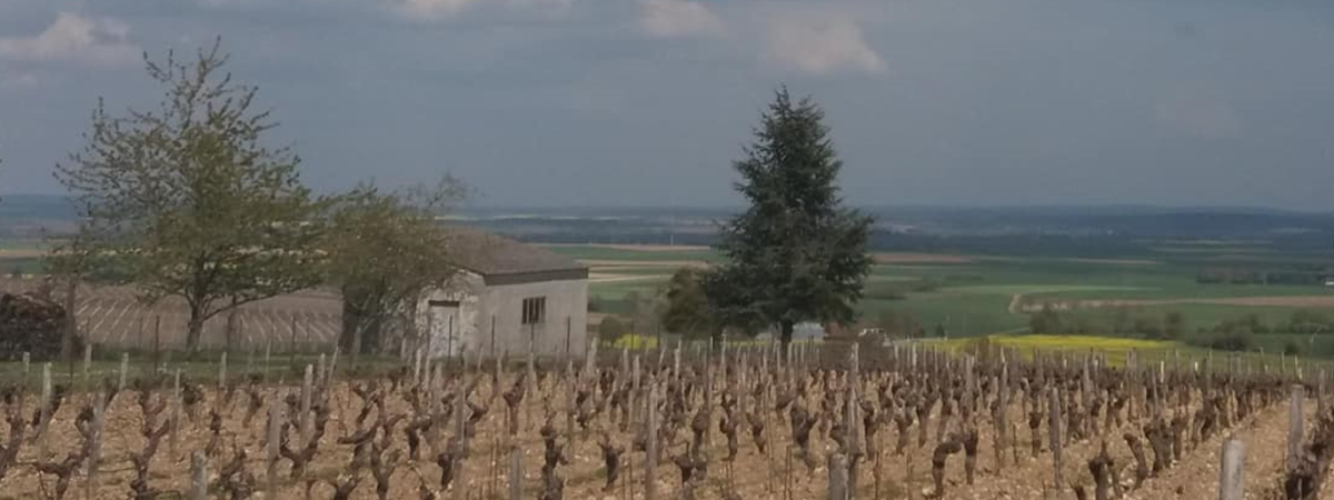 Saint-Andelain