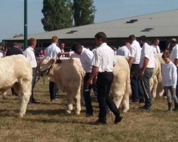 Concours d'Élevage bovins en Nièvre