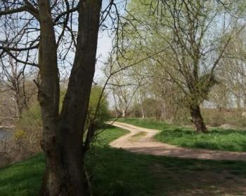 Les bords de Loire à Charrin
